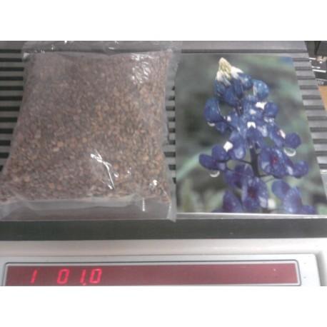 Pluebonnet - 1 Lb bulk seed