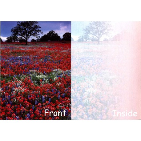 06161-Hill Country Indian Paintbrush and Bluebonnets notecard