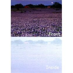 06162-Hill Country Bluebonnets and Moon notecard
