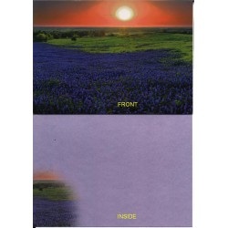 09171 - Bluebonnets at Sunrise greeting card