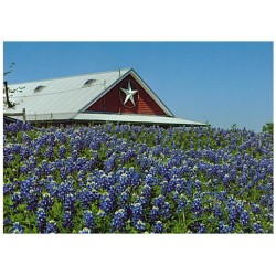 13181 - Texas Star notecard