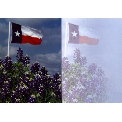 9666-Texas flag in bluebonnets