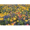 9792-Texas Wildflower Mix card