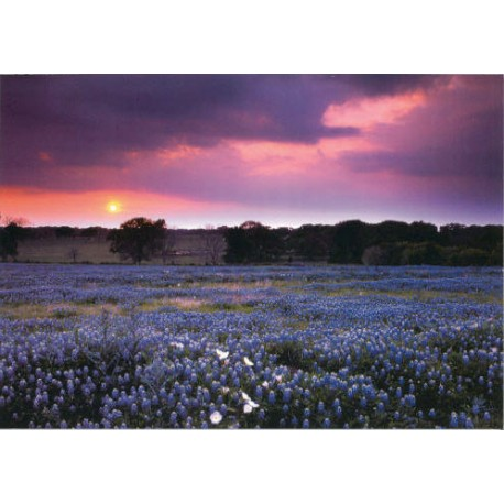03146-Brazos Sunset greeting card